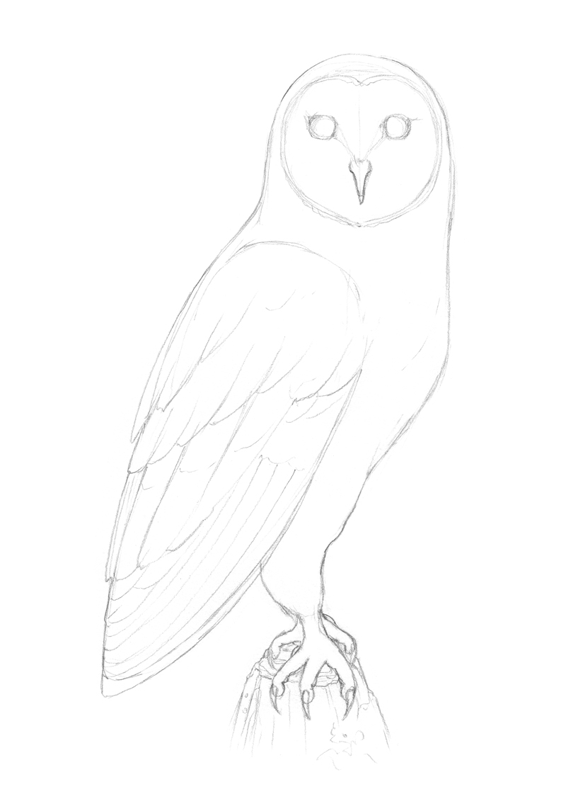 Refining the shape of the owl