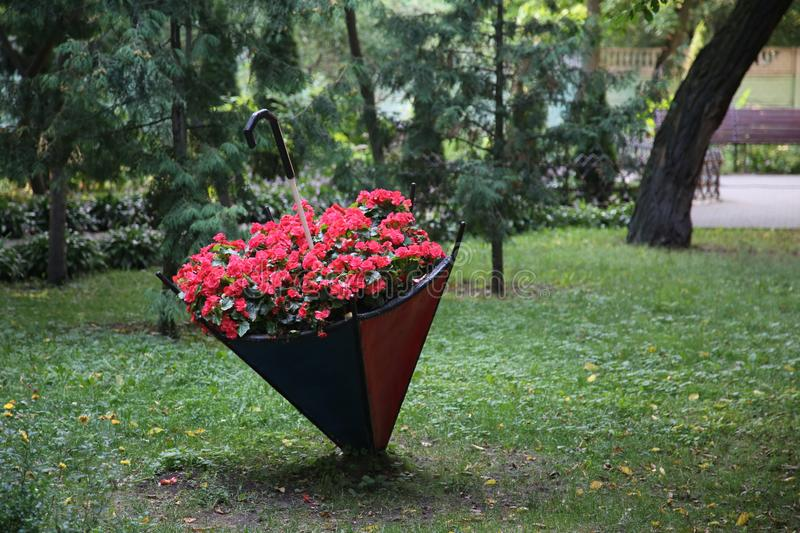 A flower bed of red flowers of unusual shape. Flower bed in the form of an umbrella.  stock photography